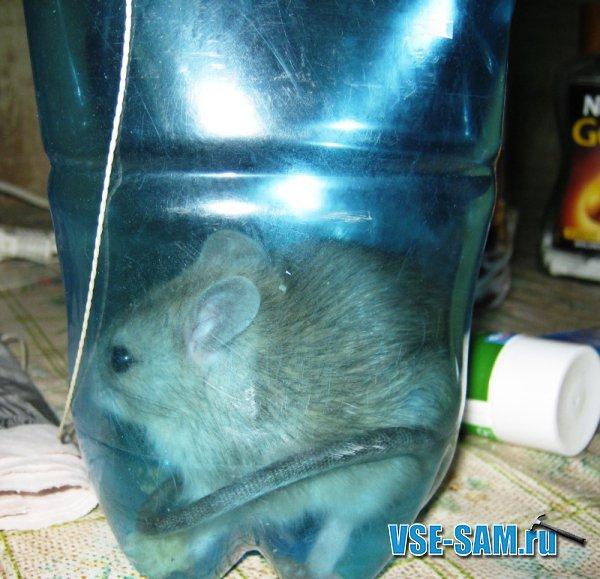 Крысы своими руками фото